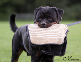 dé Rottweiler